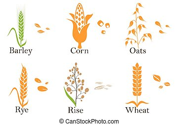 Cereals vector icons. rice, wheat, corn, oats, rye, and barley. Vector.