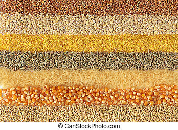 Cereals - wheat, barley, millet, rye, rice, maize and oats