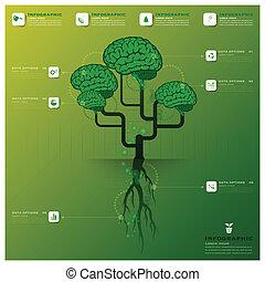 cerebro, árbol, y, raíz, infographic, diseño, plantilla