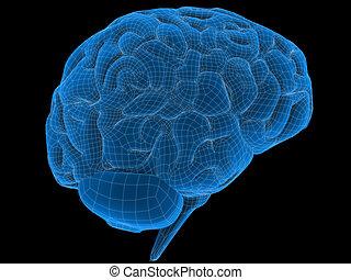cerebro, alambre