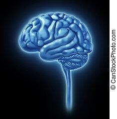 cerebro, concepto, humano