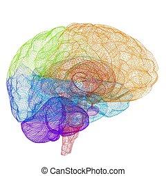 cerebro, concepto, humano, creativo