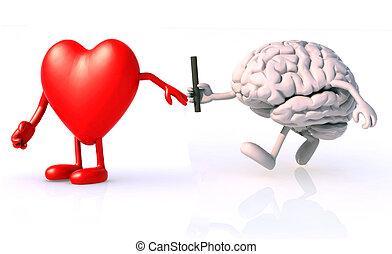 cerebro, entre, relevo, corazón
