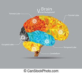 cerebro, geométrico, vector, forma, plano de fondo