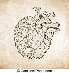 cerebro humano, corazón, dibujado, mano