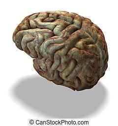 cerebro, humano, más viejo