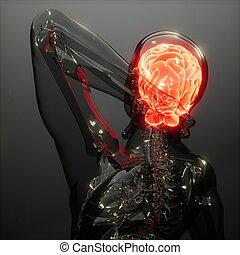 cerebro humano, radiología, examen