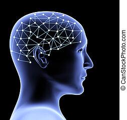 cerebro, persona, transparente, cabeza, 3d
