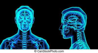 cerebro, rendido, Ilustración,  3D