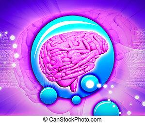 cerebro, resumen, plano de fondo