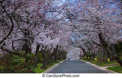 cereja, filas, árvore