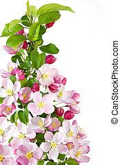 cereja, flor