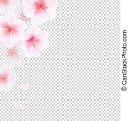 cereja, flores, isolado
