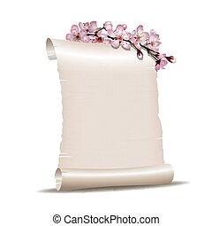 cereja, florescer, papel, ramo, em branco, scroll