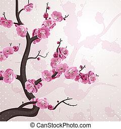 cereja, flowers., cartão, com, primavera, blossom.