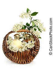 cereja, pássaro, ramo, cesta, spa, composição