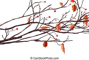 cerejas, e, folhas, ligado, ramos, em, outono, estação