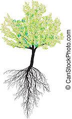 cereza, árbol floreciendo, raíces
