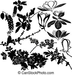 cereza, cereza, manzana, magnolia