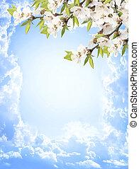 cereza, flores