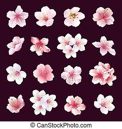 cereza, flores, conjunto, árbol, isolated.eps