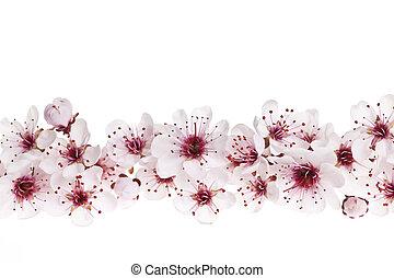 cereza, frontera, flores