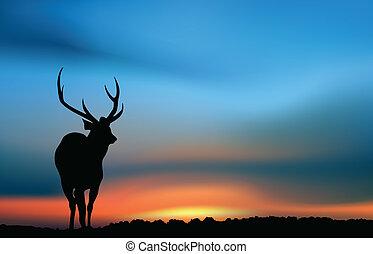 cerf, coucher soleil