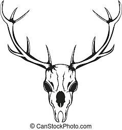 cerf, crâne, cornes