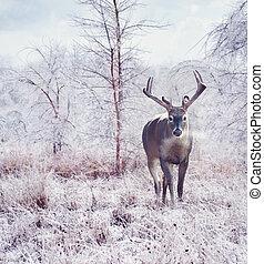 cerf, forêt, hiver