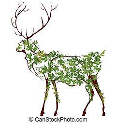 cerf, illustration