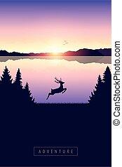 cerf, lac, nature, sauter, coucher soleil