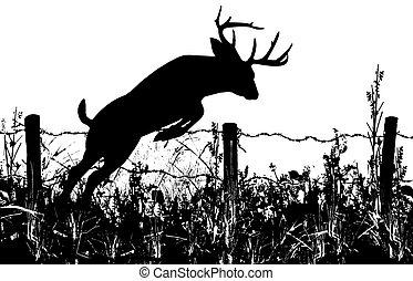 cerf, mâle, sauter, barrière