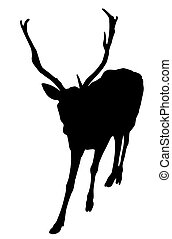 cerf, silhouette