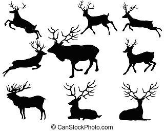 cerf, silhouettes