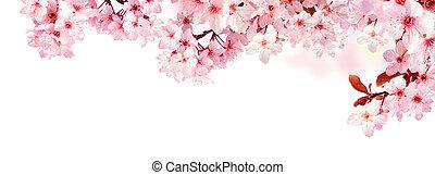 cerise, blanc, rêveur, isolé, fleurs