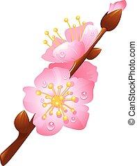 cerise, branche, fleurs