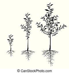 cerise, ensemble, racines, arbres, plant