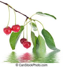 cerise, feuilles, isolé, eau, blanc, gouttes, rouges