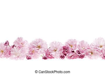 cerise, fleur, frontière, fleurs