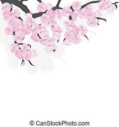 cerise, fleurs, fleurs, sakura, branche