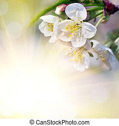 cerise, floraison, conception, fond, branche