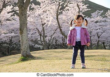 cerise, japonaise, années, fleurs, (3, old), girl