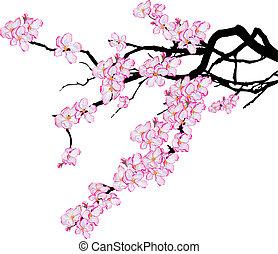 cerisier, branche