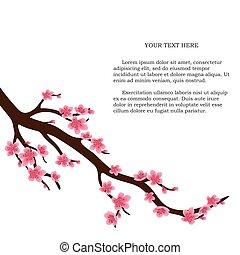 cerisier, japonaise, isolé