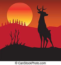 cerva, do, selvaggio, legno, fauna, cervo