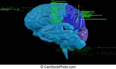 cerveau, animation, tourner, numérique