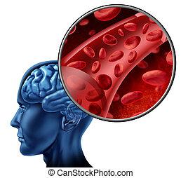 cerveau, cellules, sanguine