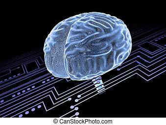 cerveau, circut, planche, humain