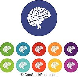 cerveau, ensemble, icônes