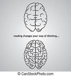 cerveau, fond